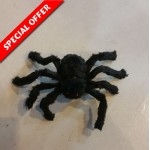 Black Spider for Deco - Small